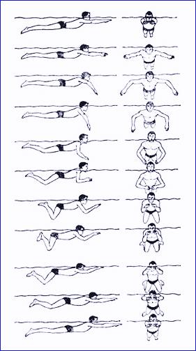 брасс (схема плавания)